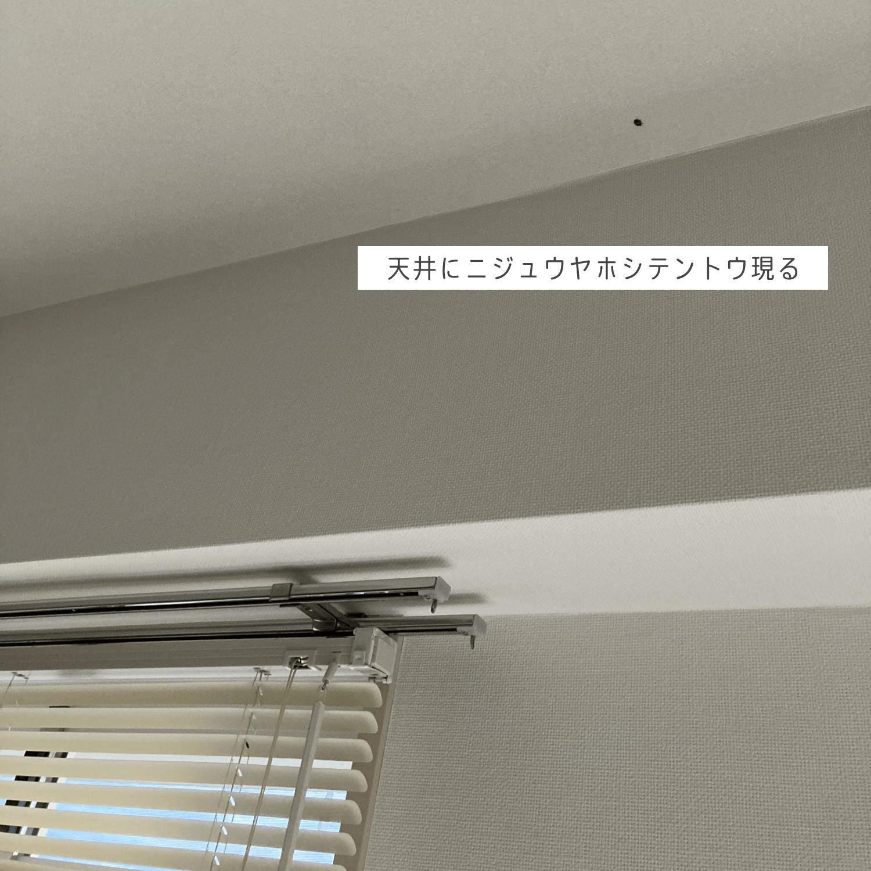 天井に止まるテントウ虫